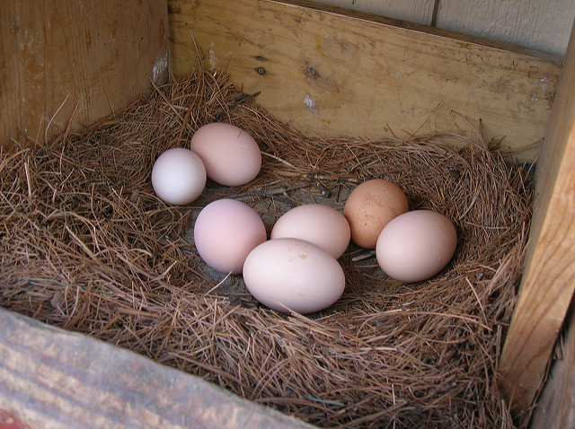 Question Three: The egg debate