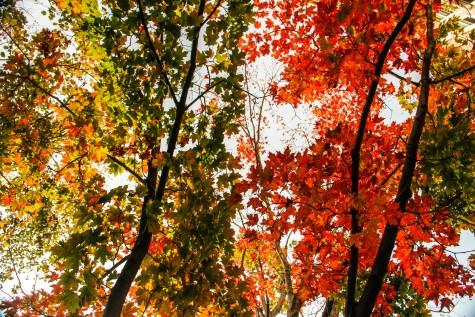 All the leaves are brown: Fall playlist