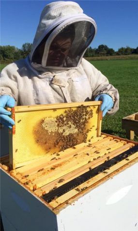 Chief Apiary Inspector Kim Skyrm examines honeybees at the UMass apiary. (Kylee Denesha/Amherst Wire)