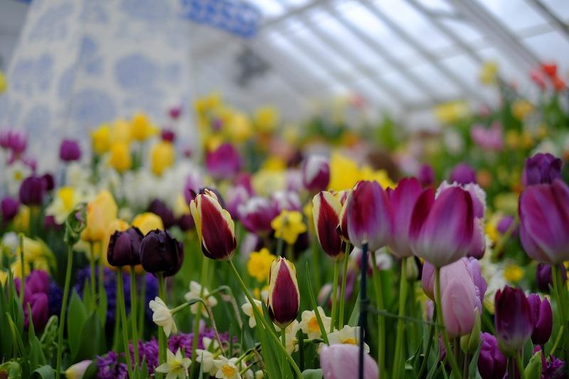 Botanic Garden of Smith College. (Morgan Hughes/Amherst Wire)