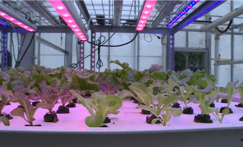 Just add water: Stockbridge students explore the future of farming