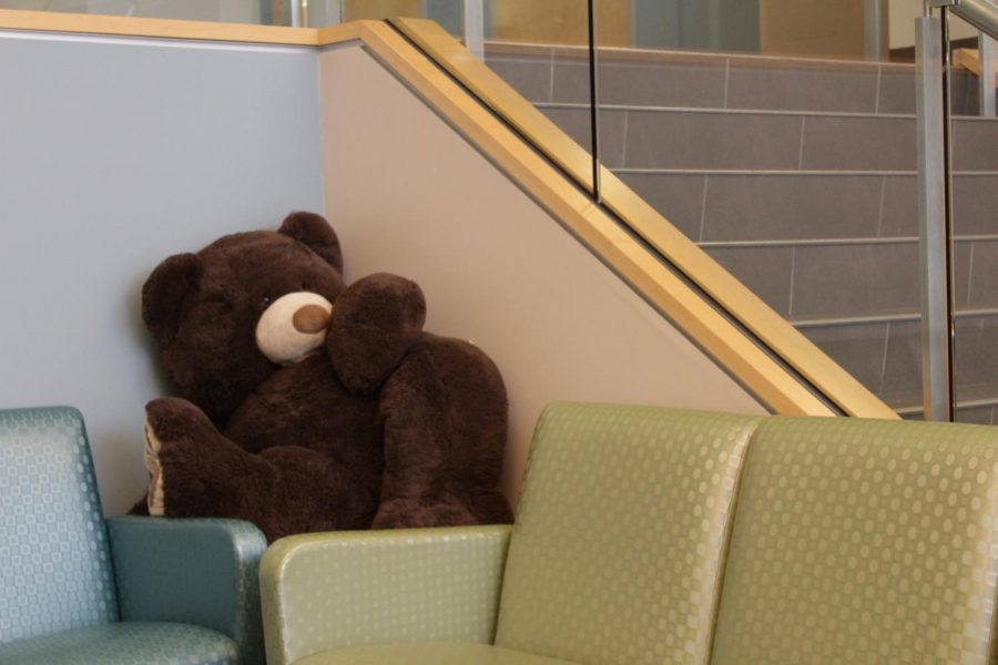 Inside Mount Ida's Center for Veterinary Technology, a stuffed bear lays in the lobby. (Brian Choquet/ Amherst Wire)
