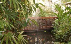 Durfee Conservatory: UMass' historic hidden oasis