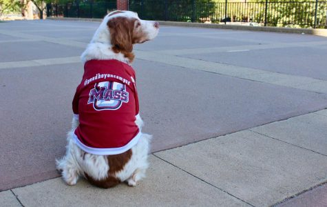 Goodboyoncampus: UMass' newest and cutest mascot