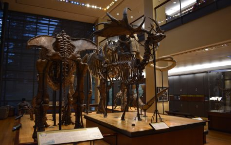 Museum hopping in Amherst: three of the best museums to visit in a day
