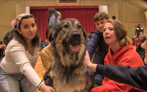The Paws Program brings smiles to students