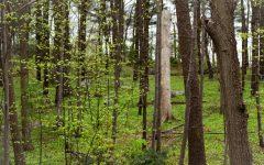 Introspective Ramblings: Indigo Woods