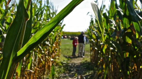 Top Five: Halloween activities in the Pioneer Valley